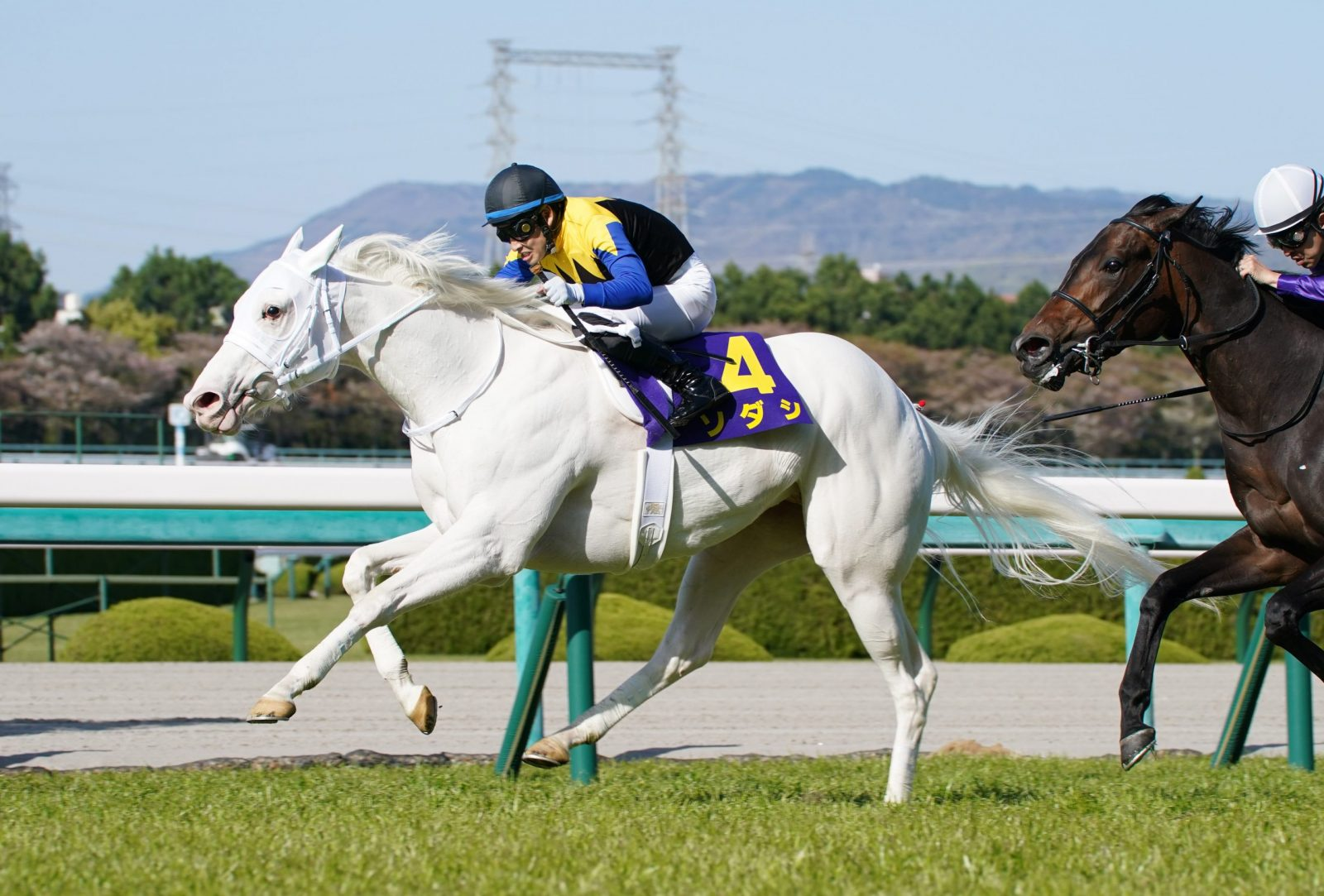 HORSE RACING | Sodashi Bests Field in Oka Sho, Becomes First White Thoroughbred to Win a JRA Classic Race | JAPAN Forward